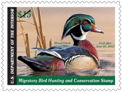 2013 Federal Duck Stamp