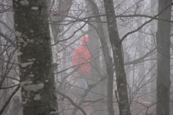 hunter in a foggy woods