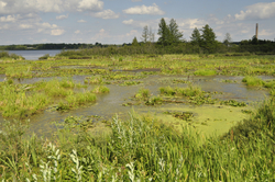 Wetlands in Laona, Wisconsin