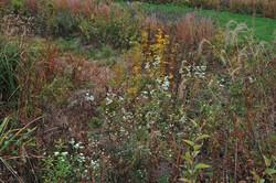 Native Plant Garden in Wisconsin