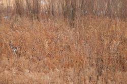 Deer hiding in grass