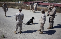 Military Working Dogs Service K9 Marines