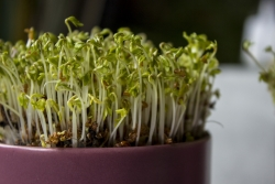 seeds sprouting in container