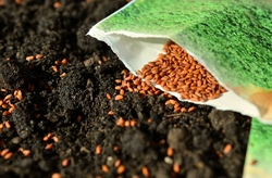 soil with seed packet