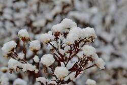 Snow on plants.