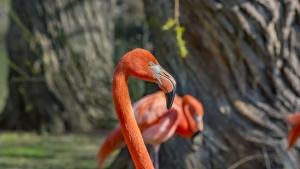Flamingos outdoors