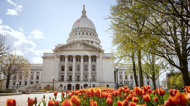 Orange tulips bloom in front of the Wisconsin State Capitol