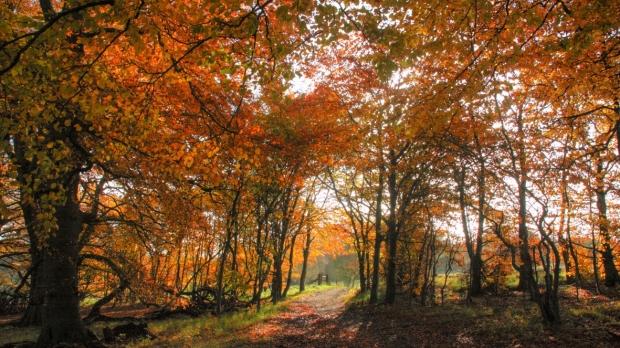 Wytham Woods in autumn