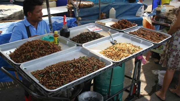 insect, bugs, food, cuisine, entomology