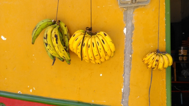 Bananas hang on a wall in Colombia.
