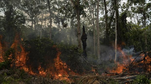 Fire in the Brazilian Amazon rain forest