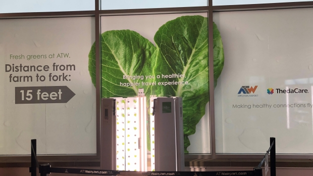 Hydroponic vegetation at Appleton Airport