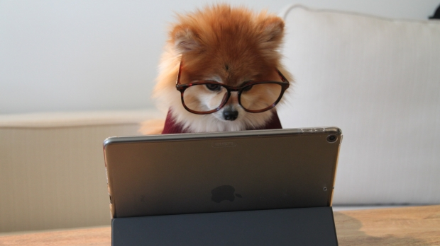 A dog wearing glasses sitting at a computer