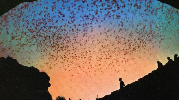 bat flight from natural entrance, Carlsbad Caverns National Park, New Mexico