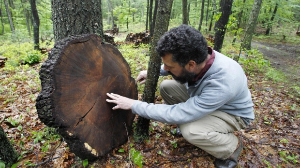 A man kneels to study the rings of a tree in a forest