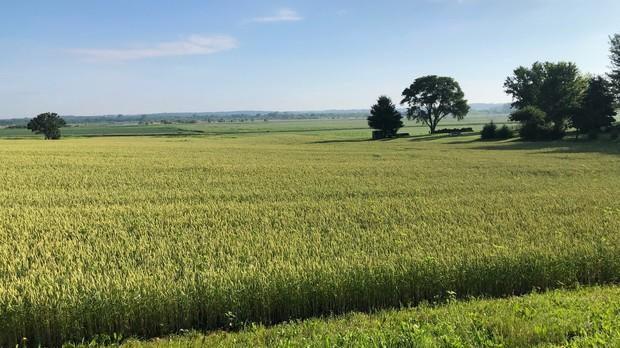 A farm field near Janesville