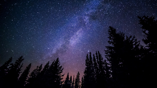 Milky Way with trees in foreground.
