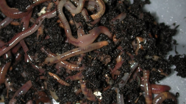 worms, photo by Roger Reynolds