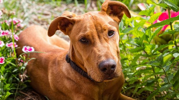 dog, Marc Dalmulder (CC-BY)