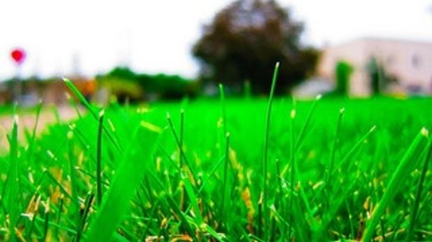 grass, image by Flickr user Nan Palmero