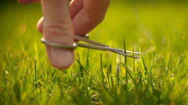 lawn, Jeremy Page (BY-NC-SA)