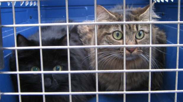 cats in carrier