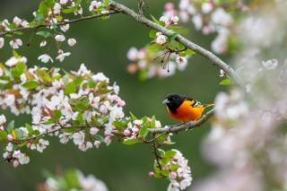 bird in flowering bush