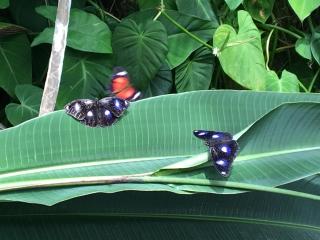 Australian Butterfly Sanctuary in Kuranda, AU - Photo by Allen Rieland