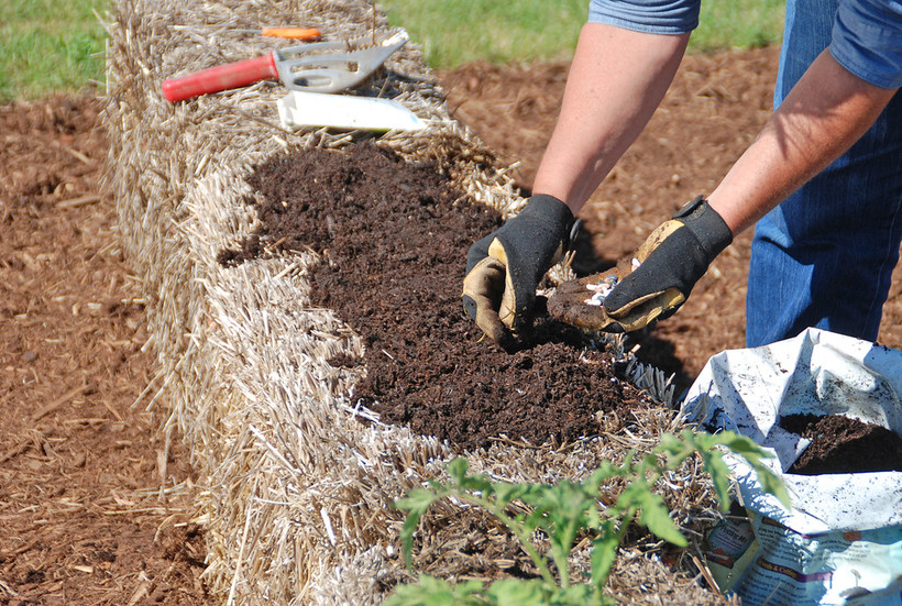 preparing a straw bale for plants