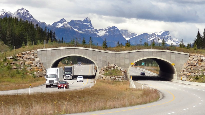 wildlife overpasses on the Trans-Canada Highway in Alberta