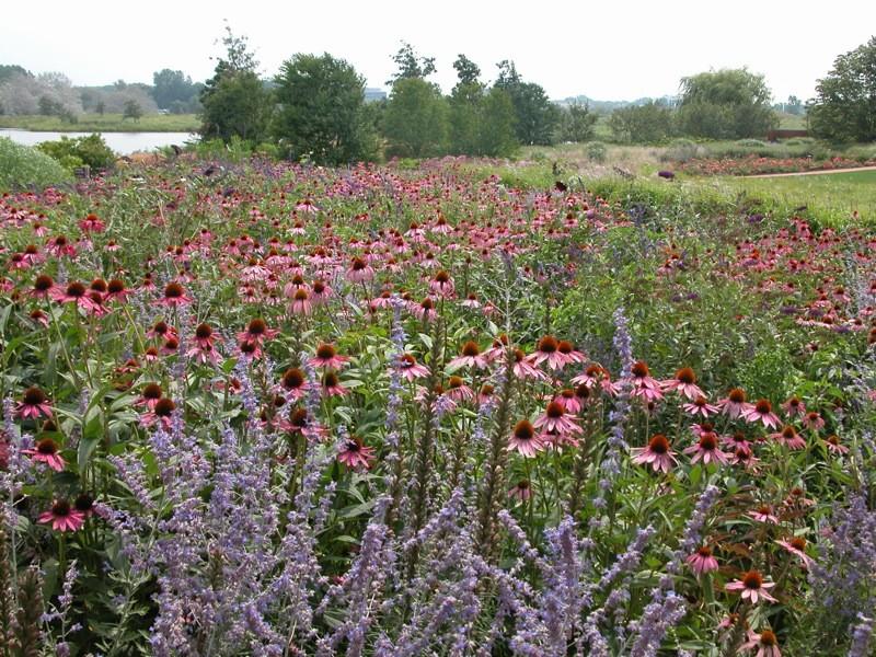 Prairie garden at the Chicago Botanical Garden