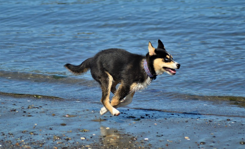 A young dog cools off at the beach