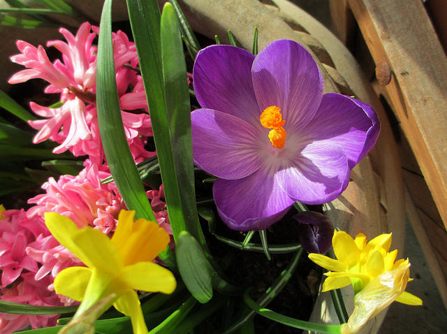 spring flowers, Barry Lewis (CC-BY)
