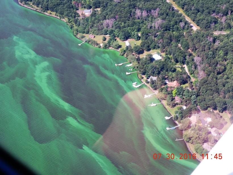 Blue-green algae blooms on Lake Petenwell