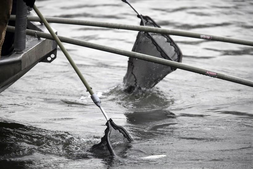 Asian carp, fishing net