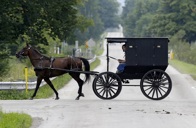 Amish girl in horse buggy