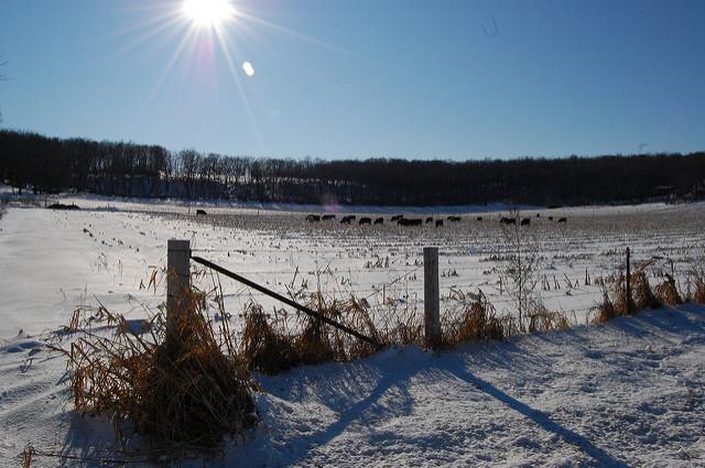 snowy farm field