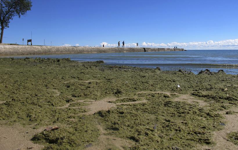 Algae coating a Lake Michigan beach