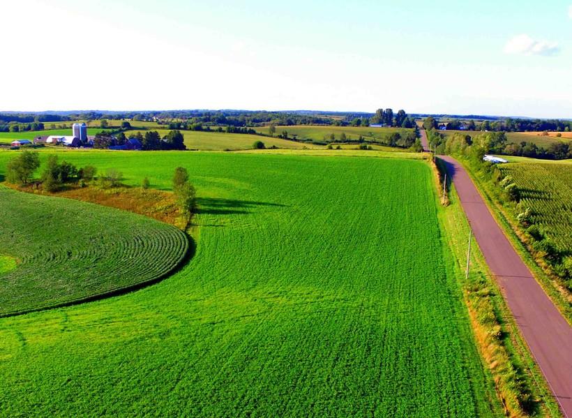 Photo wheat field