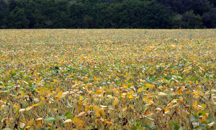 soybeans, field, farm