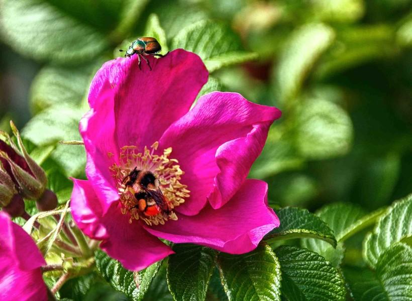 beetle, flower