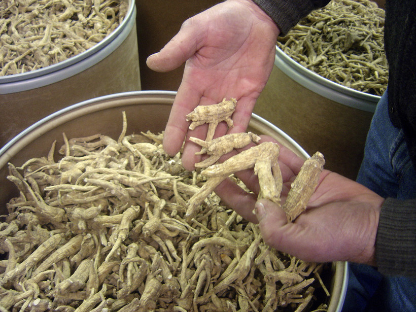 Wisconsin ginseng in Wausau