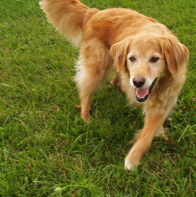 Dog performing trick