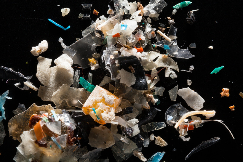 Microplastics from the Rhode River