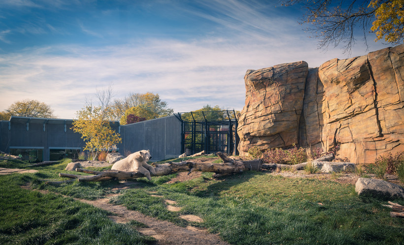 polar bear, 2015, Henry Vilas Zoo, Madison