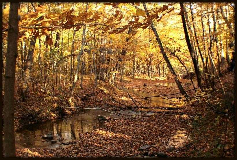 Hobbs Woods , Fond du Lac County