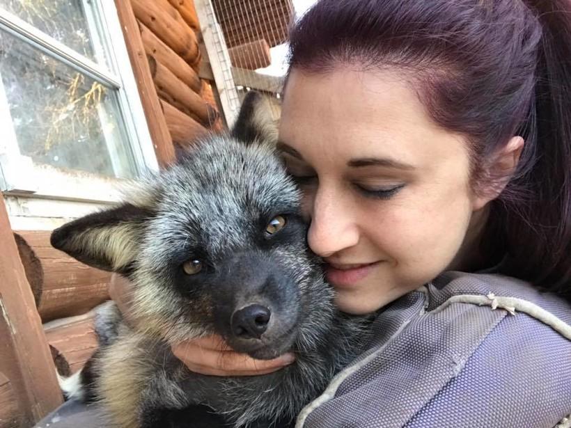 fox, rescue, Jamie Kozloski