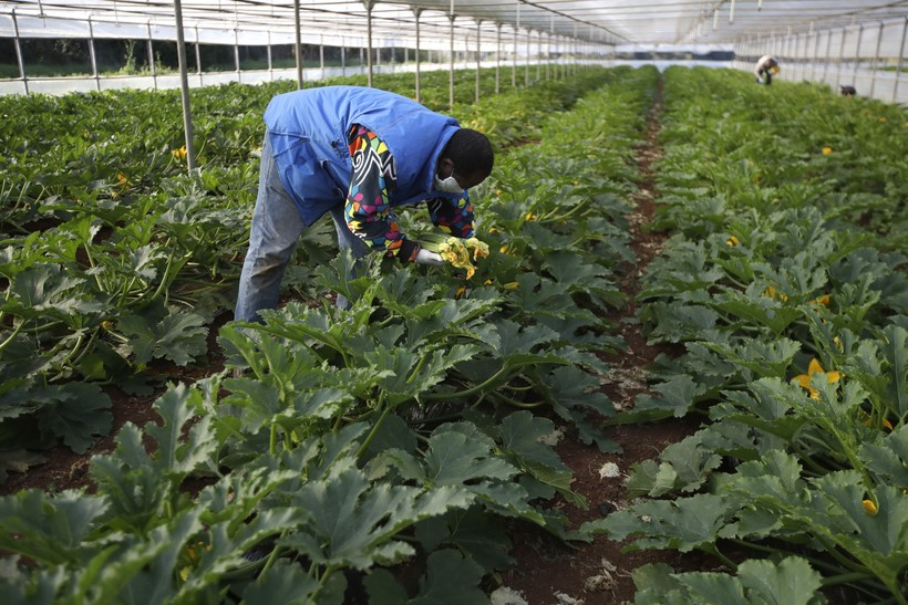 migrant worker, coronavirus, covid-19, farm