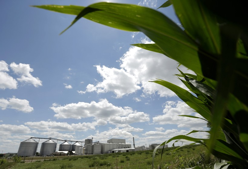 plant that produces ethanol