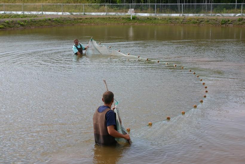 Wisconsin fish farm